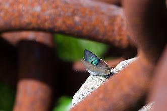 Photo: 綺麗な羽