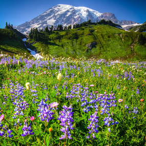 by Nolan Hauke - Landscapes Mountains & Hills ( mt rainier, hdr, landscape )