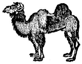 Photo: Wielbłąd z XIX-tego wieku