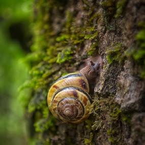 Home green Home by Gabriel Cabrera - Nature Up Close Mushrooms & Fungi ( charcoal, macro, fungi, nature )