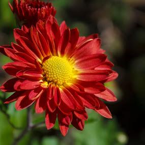 by Baggelis Karaliolios Zerofive - Flowers Single Flower