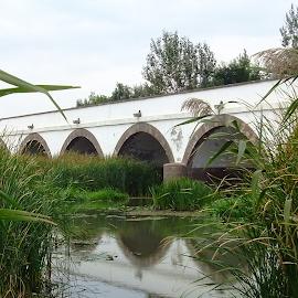 HORTOBAGY by Pal Mori - Buildings & Architecture Bridges & Suspended Structures