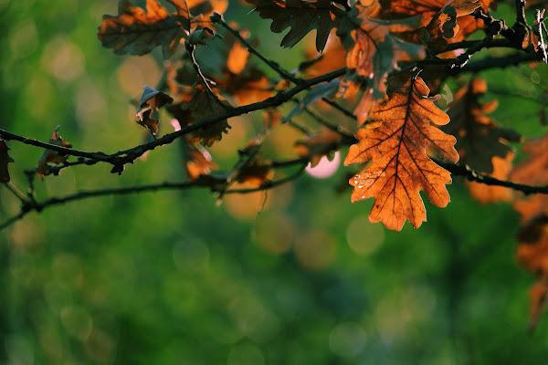 Come d'autunno... di elenabussotti