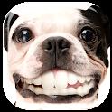 Dog Smile Teeth Live Wallpaper icon