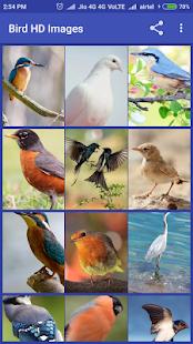Bird HD Images - náhled