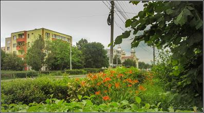 Photo: Calea Victoriei, Mr.III, spatiu verde - 2017.06.17