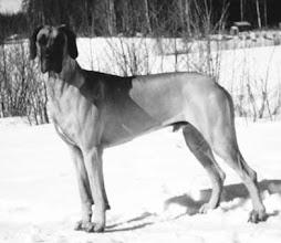 Photo: Doggi Diggarin Castlebar (1996)