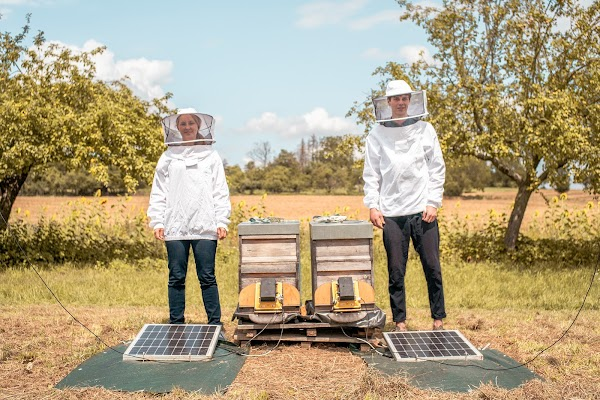 Meet the team using machine learning to help save the world's bees
