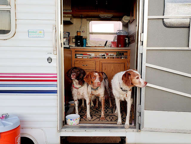 Boulder, Loa, and Torrey in the trailer