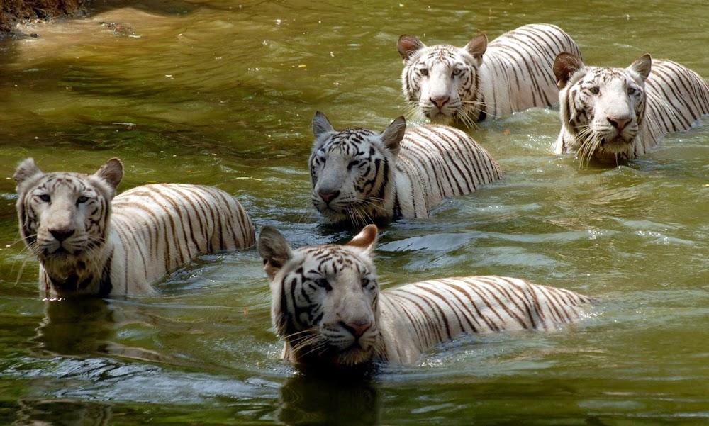 Sundarbans_National_Park