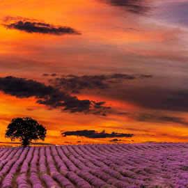 The end of the day by Venelin Dimitrov - Landscapes Sunsets & Sunrises ( sky, orange, outdoor, view, fiery sunset, sunset evening, sunset, tree, summer )