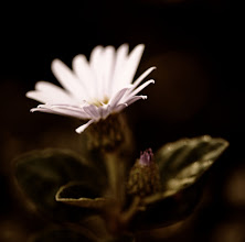 Photo: #flowerphotography