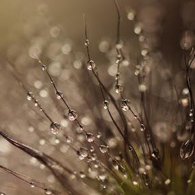 Evening Splendor by Janet Herman - Abstract Water Drops & Splashes ( abstract, macro, blades, grass, black & white, dark, night, evening, rain )
