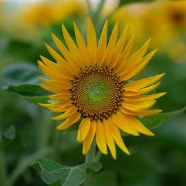 Bright future by Beh Heng Long - Flowers Single Flower ( flower,  )