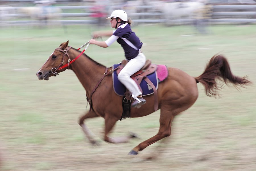 Barrel Race, Walcha by Graham MacDougall - Animals Horses ( walcha, gymkhana, barrels, horse, pwcmovinganimals )