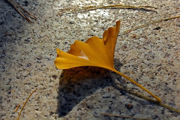 Colore giallo autunno di c2alex206