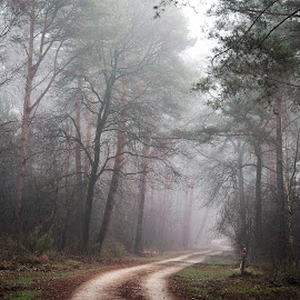 by Lubos Krahulec - Landscapes Forests