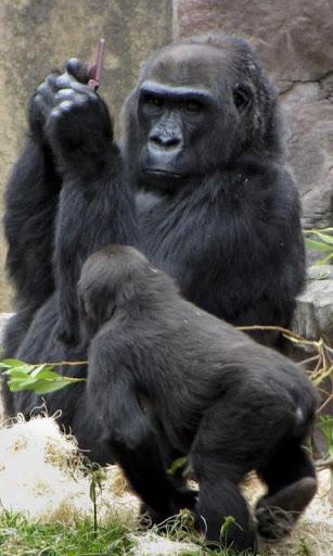 大猩猩拼图