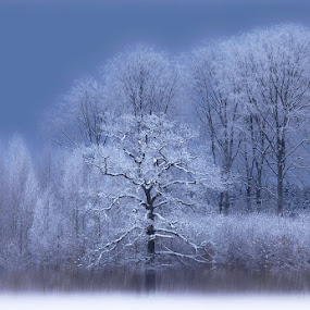 A cold morning. by Allan Wallberg - Landscapes Forests ( sweden, winter, cold, blue, snow, frost, white, trees, atmosphere, beautifully,  )