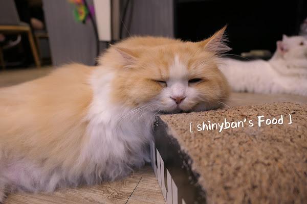 和貓咪有約 貓咪主題咖啡館