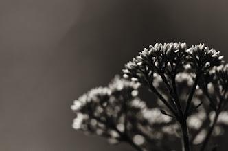 Photo: and goodnight  #flowerphotography  #monochromephotography
