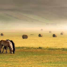 Peacefulness by Roberto Melotti - Landscapes Prairies, Meadows & Fields ( roberto melotti, horses, fog, peacefullness, horse, nikon d810, norcia, castelluccio di norcia, italy, castelluccio )