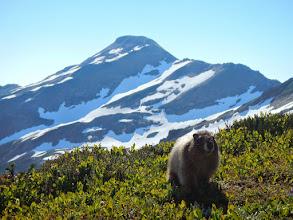 Photo: A marmot roams through our camp