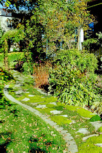 Photo: Mixed Scots and Irish Moss soften this walkway and blend it into the landscape.