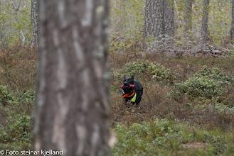 Photo: Boo har funnet noen og kommer inn med melding!