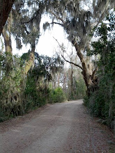 Photo: Live Oaks at Savannah National Wildlife Refuge
