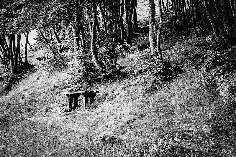 Il bosco incantato di tiopepe