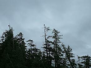 Photo: Two eagles on Kitson Island.