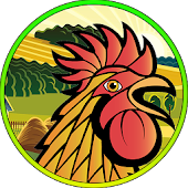 Rooster Fight Sim Multiplayer