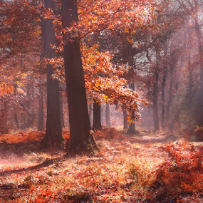 Autumn Morning by Ceri Jones - Landscapes Forests ( woods forest )