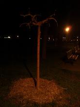 Photo: I want this tree for Tigo.