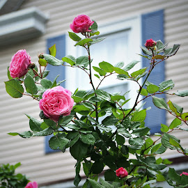 by Darrell Tenpenny - Flowers Flower Gardens