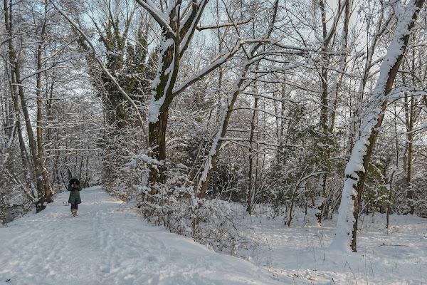Una bella nevicata! di Pi_M_Pi
