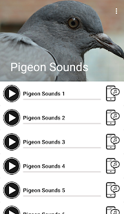 Pigeon Sounds - náhled