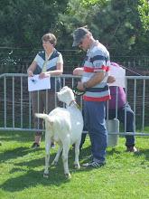 Photo: Klasse 10; overlopers twee jarige witte geit.  1a. Marijke 189.