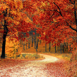 Fall by Pete San Giorgio - Landscapes Forests (  )