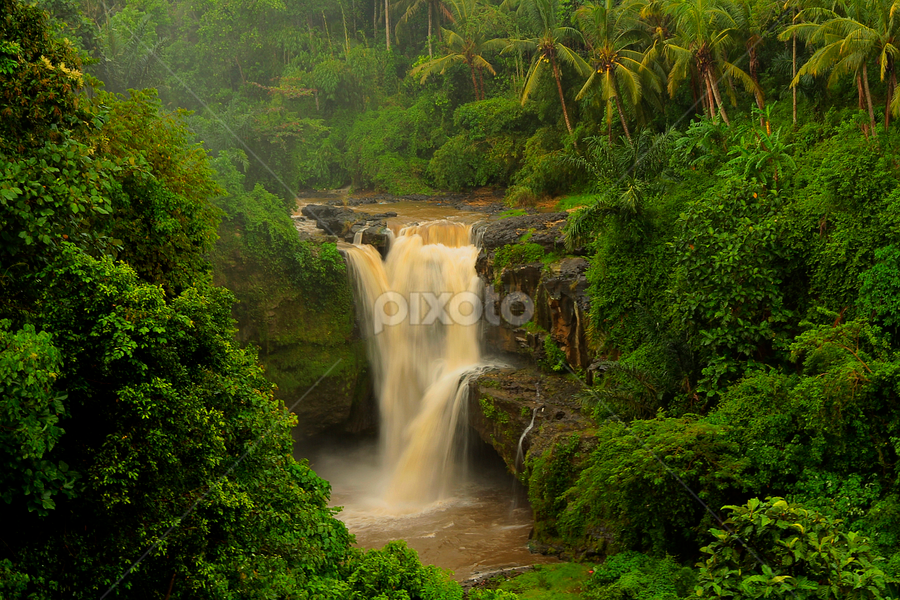 Waterfall on the Jungle by Choky Ochtavian Watulingas - Landscapes Forests ( forests, water, bali, choky sinam, jungle, waterfall, trees, travel, landscape, tegenengan waterfall )