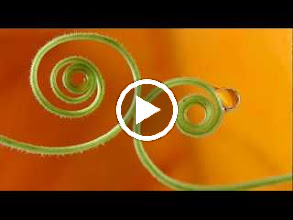 Video: A. Vivaldi  Cessate, omai cessate [cantata] for alto, strings   b.c. (RV 684) - Part I -
