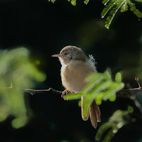Bird by Avtar Singh - Novices Only Wildlife ( bird, foliage, green leaves.,  )