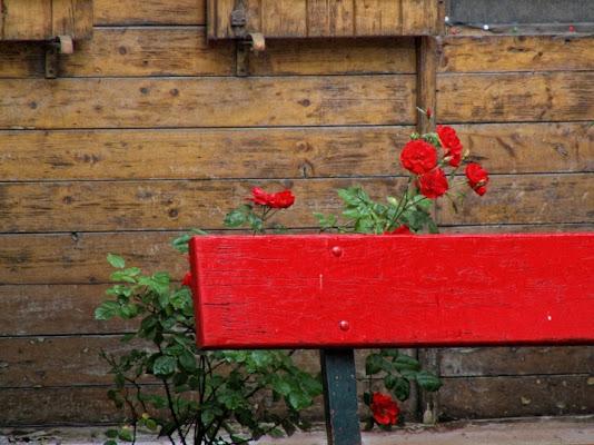 La panchina e la rosa di 'Lorena'
