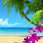Koh Lanta App icon