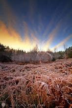 Photo: Frozen Fern