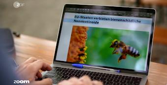 Laptop mit Bild von fliegender Biene, «EU-Staaten verbieten bienenschädliche Neonicotinoide».