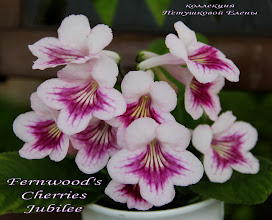 Photo: Fernwood's Cherries Jubilee