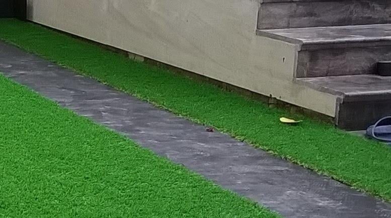 sự phát triển thảm sân vườn năm 2018 và chi phí làm một sân bóng đá cỏ nhựa nhân tạo