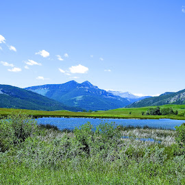 Pond South of Augusta by James Oviatt - Landscapes Mountains & Hills ( water/mountains/trees/green/shadows/bushes )
